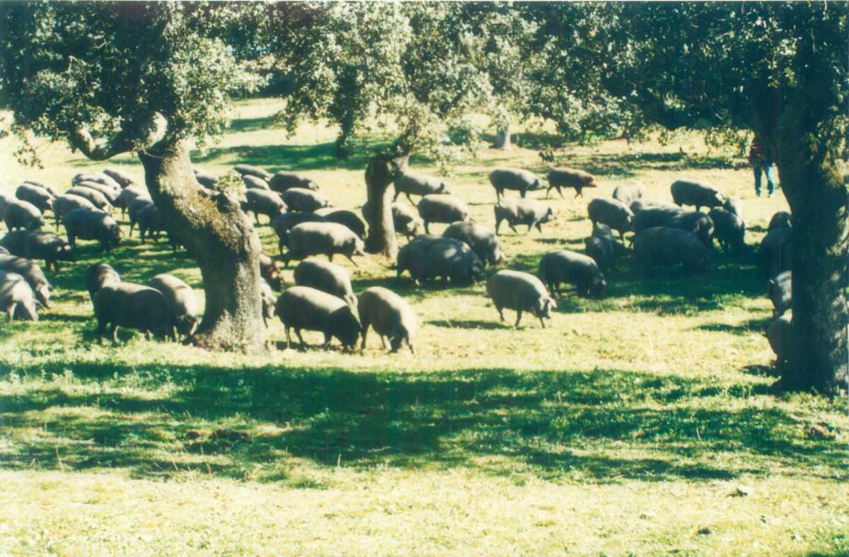 Finca Embutidos Quintero en Monesterio Extremadura